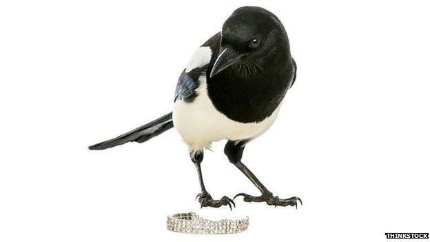Burung magpie