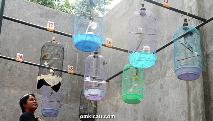 Breeding lovebird Ebod Jaya Farm