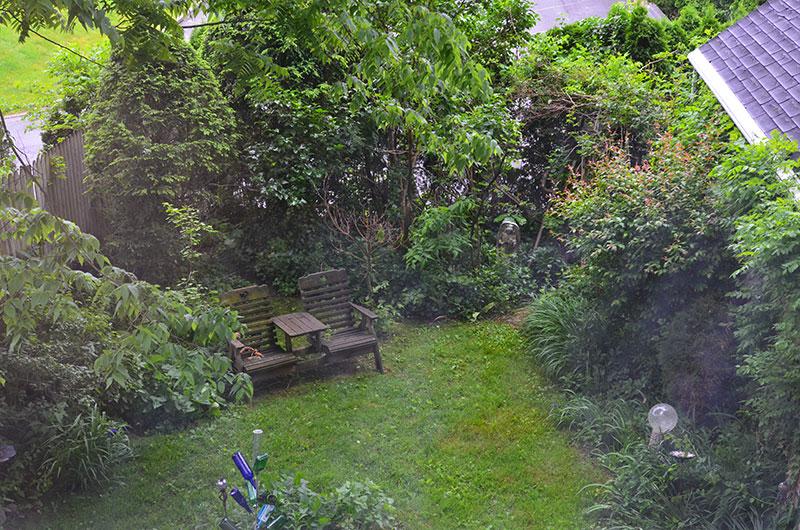 Membuat habitat untuk burung liar di halaman rumah agar burung betah