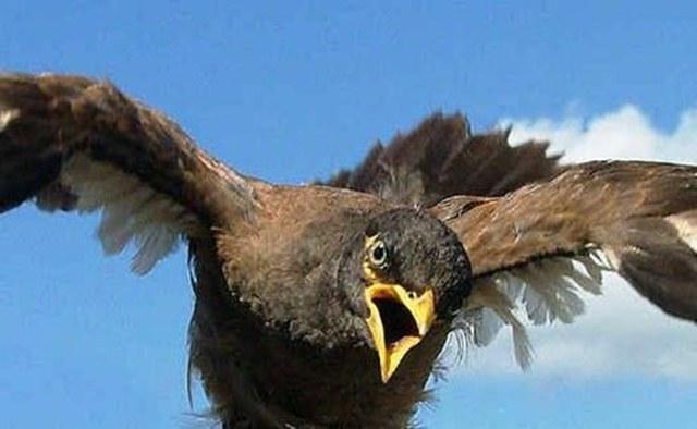 Burung hama