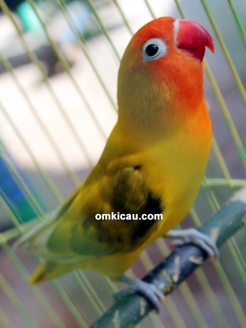 JP Bird Farm