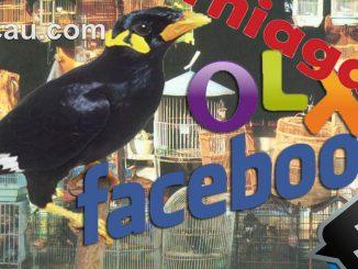 Jual beli burung online