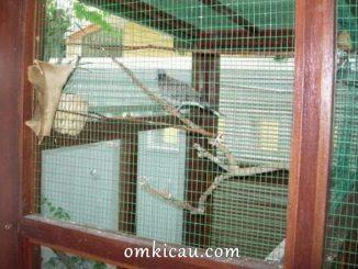Burung dalam kandang aviary