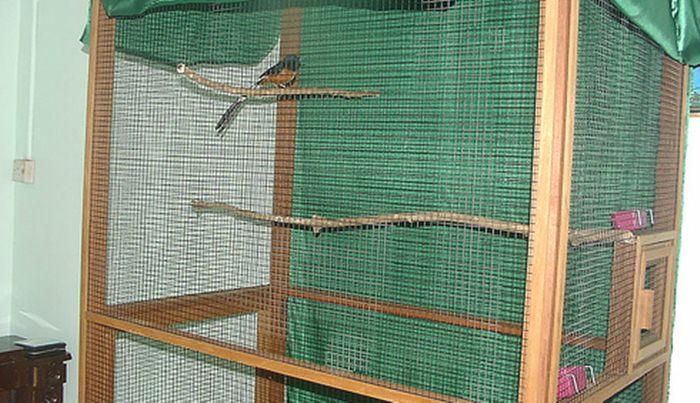 Burung murai di kandang aviary