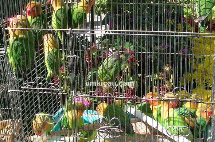 Burung di kandang