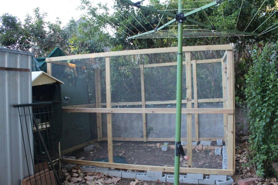 Membuat habitat aviary untuk burung kicauan | Page 3 of 5 ...