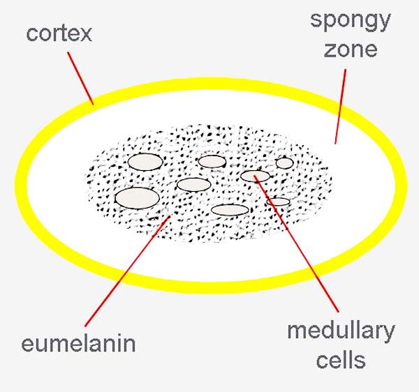 struktur bulu pada lovebird-2