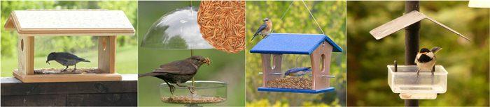 Bird feeder untuk burung pemakan serangga