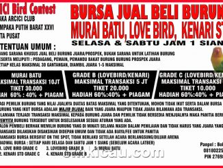 Bursa jual-beli burung on the spot Arcici Bird Contes