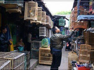 burung bakalan di pasar burug