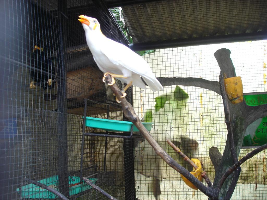 Kandang untuk menangkar burung beo