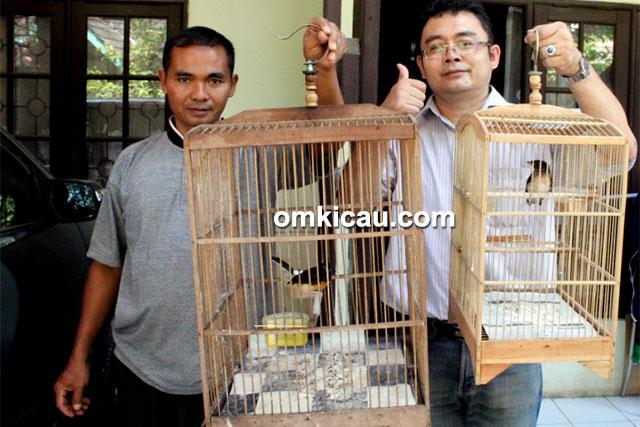 feat breeding murai batu AG BF Bekasi