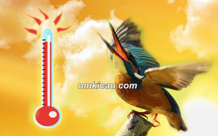 dehidrasi burung