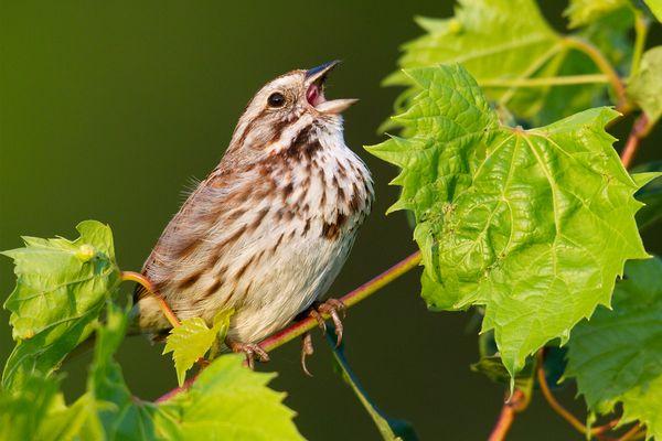 burung kontaminasi merkuri