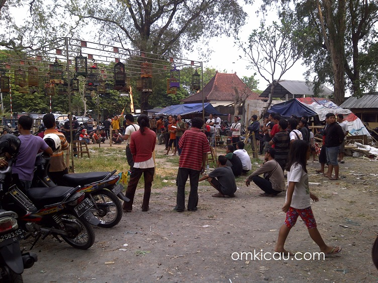 Latber dan burung pleci si Selter Pasar Depok Solo (2)