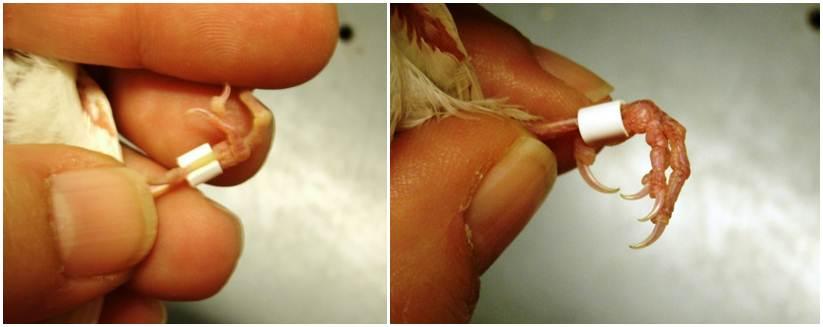 Mengatasi jari kaki yang bengkok