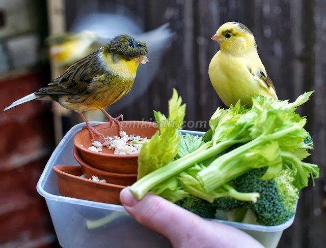 46+ Gambar Hewan Burung Dari Biji Bijian HD Terbaik