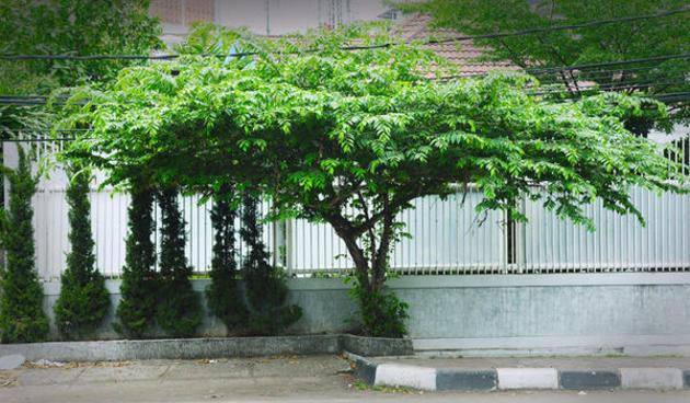 Gambar Psikotes Rumah Pohon Dan Orang Gambar Om
