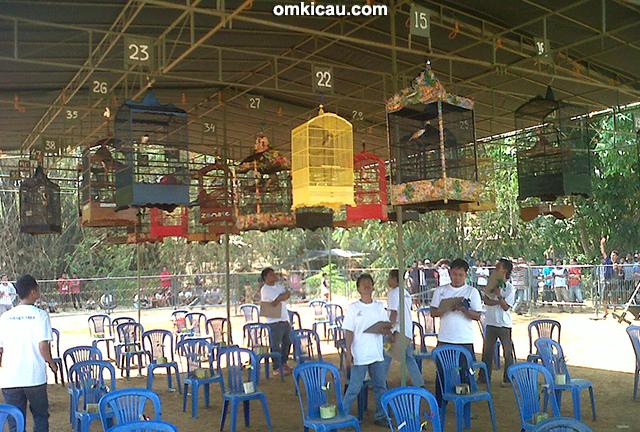 Kelas cendet Jolo Tundo Cup 1 Jepara