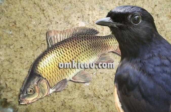 Tepung ikan untuk berbagai jenis burung peliharaan
