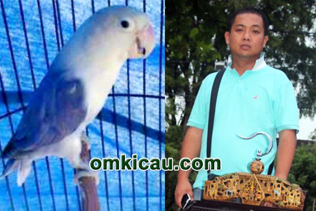 feat lovebird Matso