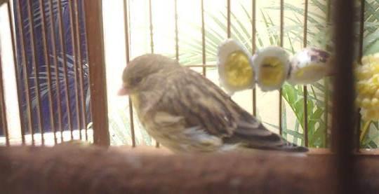 Banyak jenis burung yang menyukai makan telur rebus