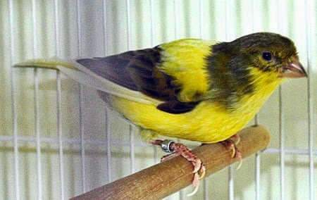 Kuku atau paruh burung yang panjang bisa menghambat aktivitas burung