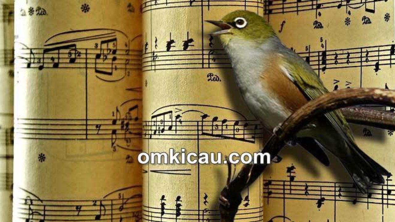 14+ Puisi tentang hewan peliharaan burung terbaru