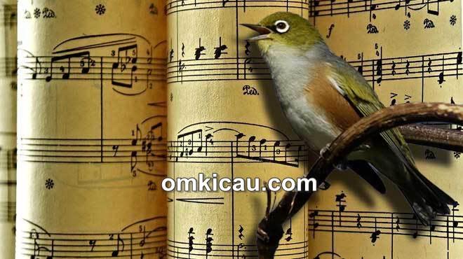 Pengaruh musik klasik terhadap burung peliharaan