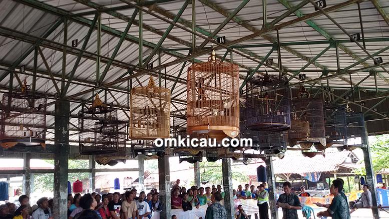 Lomba Burung Pantura Cup II di Tanjung, Brebes