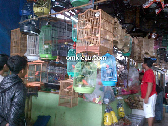 Pasopati Bird Shop
