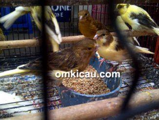 Pasopati Bird Shop
