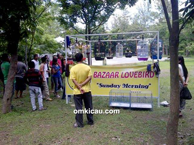 Bazaar lovebird