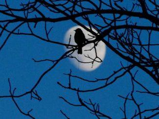 Burung mengubah waktu berkicau mereka jadi lebih cepat saat fajar untuk bersaing dengan suara bising