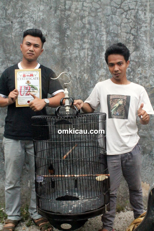 Om Bayu Crown Canary