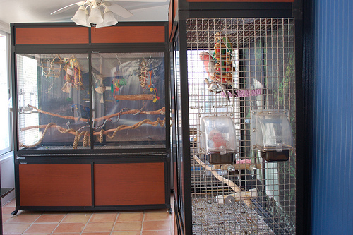 Kandang aviary indoor dengan menggunakan flexi glass atau akrilik membuat penampilan kandang menjadi lebih elegan | Foto Jamieleigh