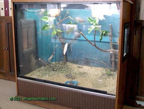 Kandang aviary transparan dengan menggunakan fleixiglass membuat burung seperti berada di habitatnya