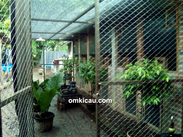 Kandang ternak murai batu Java 168 BF Madiun