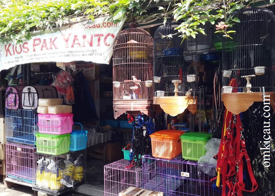Kios Pak Yanto (Kios No. 7) Pasar Satwa dan Tanaman Hias Yogyakarta (Pasthy), Jl. Bantul KM 1, Dongkelan, Yogyakarta, Telp. 081 9040 99566 atau 087 7386 55511.