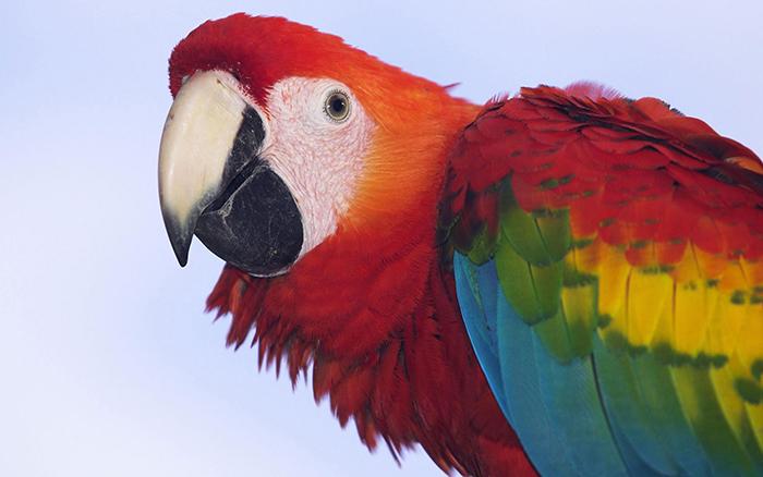 Burung dulu bergigi