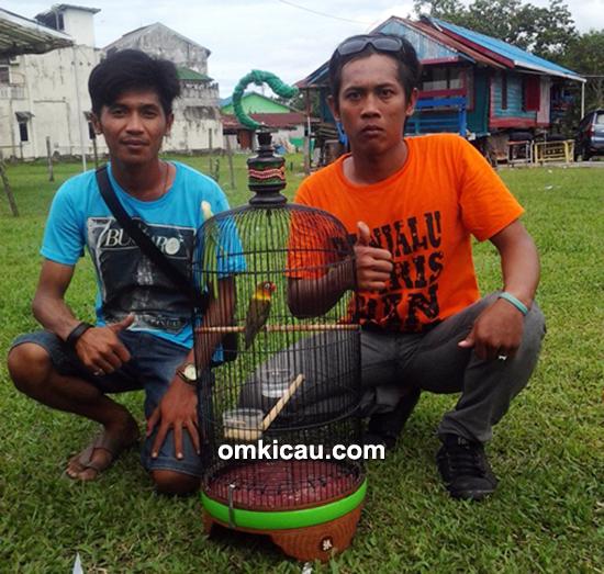 Lovebird Badriah milik H Budi (Handil)