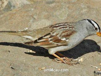 Mencegah dan mengatasi burung yang sering makan kotorannya sendiri