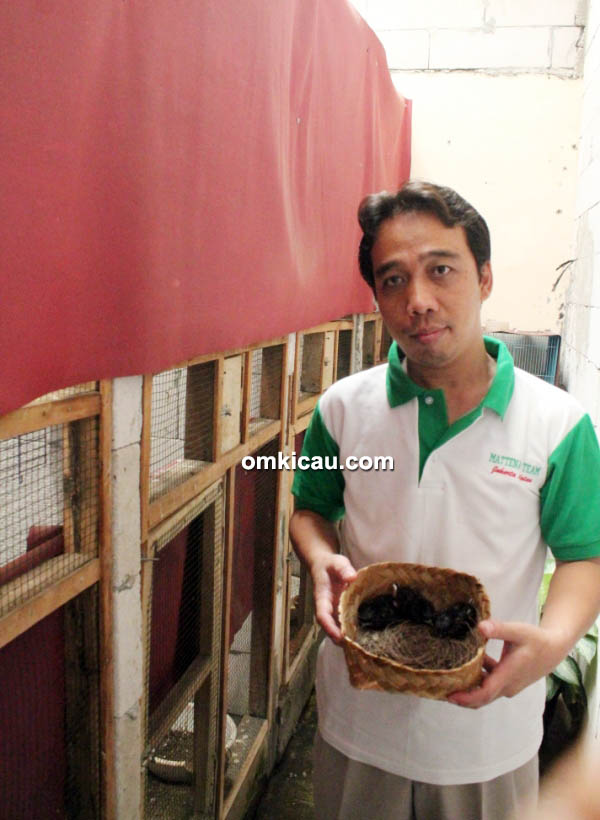 breeding murai batu Matena BF Jakarta