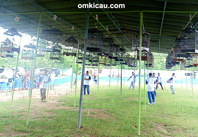 Lomba Burung KMRN BC - Suasana lomba di Kelas MB VIP