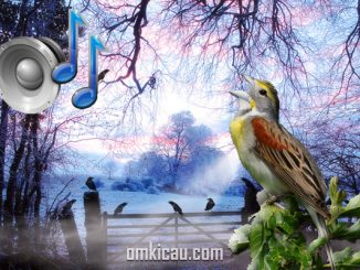 Ragam suara kicauan burung liar di pagi hari (Dawn chorus)