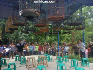 BBC Cirebon - kelas murai batu