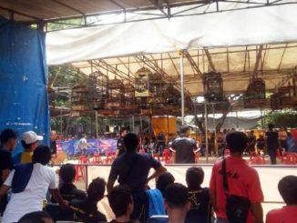 Lomba burung berkicau HSBC Award Bekasi