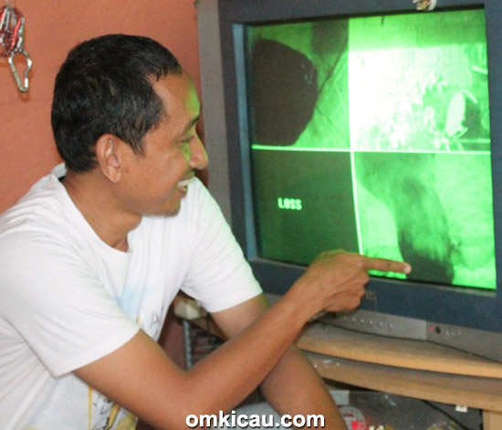 Breeding cucakrawa Ony BF Jakarta