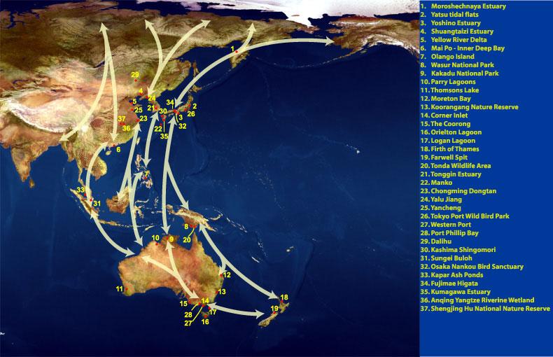 Jalur migrasi Asian - Australasian
