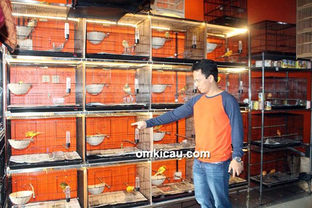 Rumah Burung Betawi - Kandang ternak khusus YS lokal